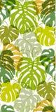 Άνευ ραφής διανυσματικό σχέδιο των φύλλων Monstera πρασινάδων Εξωτικός τροπικός επαναλαμβάνει τη διακόσμηση διανυσματική απεικόνιση