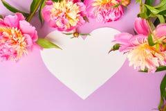 άνευ ραφής διάνυσμα βαλεντίνων μορφής προτύπων s καρδιών δώρων πλαισίων σχεδίου ημέρας καρτών Ρόδινα peonies στο πορφυρό υπόβαθρο Στοκ Φωτογραφίες