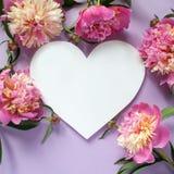 άνευ ραφής διάνυσμα βαλεντίνων μορφής προτύπων s καρδιών δώρων πλαισίων σχεδίου ημέρας καρτών Ρόδινα peonies στο πορφυρό υπόβαθρο Στοκ εικόνες με δικαίωμα ελεύθερης χρήσης