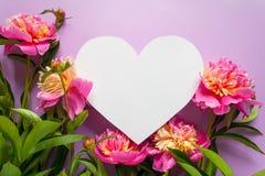 άνευ ραφής διάνυσμα βαλεντίνων μορφής προτύπων s καρδιών δώρων πλαισίων σχεδίου ημέρας καρτών Ρόδινα peonies στο πορφυρό υπόβαθρο Στοκ Εικόνα