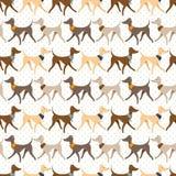 Άνευ ραφής διανυσματικό σχέδιο με περπατώντας αρκετά ιταλικά Greyhounds Στοκ Εικόνα