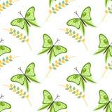 Άνευ ραφής διανυσματικό σχέδιο με τα έντομα, ζωηρόχρωμο υπόβαθρο με τις πράσινες πεταλούδες και κλάδοι με τα φύλλα OM το άσπρο σκ Στοκ Φωτογραφία