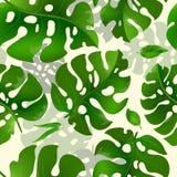 Άνευ ραφής διανυσματικό σχέδιο με τα πράσινα εξωτικά φύλλα Διανυσματική απεικόνιση