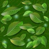 Άνευ ραφής διανυσματικό σχέδιο με τα πράσινα φύλλα Ελεύθερη απεικόνιση δικαιώματος