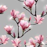 Άνευ ραφής διανυσματικό σχέδιο με το άνθος brunch Magnolia διανυσματική απεικόνιση