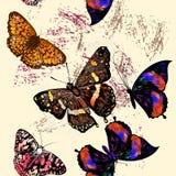 Άνευ ραφής διανυσματικό σχέδιο πεταλούδων Στοκ Εικόνες
