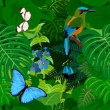 Άνευ ραφής διανυσματικό τροπικό υπόβαθρο ζουγκλών τροπικών δασών με το motmot και τις πεταλούδες διανυσματική απεικόνιση