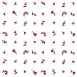 Άνευ ραφής κόκκινη ρόδινη πορφύρα λουλουδιών watercolor σχεδίων ανοιχτή στοκ εικόνες