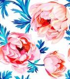 Άνευ ραφής ομιλία λουλουδιών Anemone, στο άσπρο υπόβαθρο ελεύθερη απεικόνιση δικαιώματος