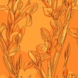 Άνευ ραφής πορτοκαλιές ίριδες διανυσματική απεικόνιση