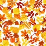 Άνευ ραφής πρότυπο με τα ζωηρόχρωμα φύλλα φθινοπώρου επίσης corel σύρετε το διάνυσμα απεικόνισης Ελεύθερη απεικόνιση δικαιώματος
