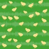 Άνευ ραφής πρότυπο με τα κοτόπουλα στη χλόη Στοκ Εικόνα