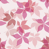 Άνευ ραφής πρότυπο με τα μειωμένα φύλλα Υπόβαθρο με τα φύλλα αναρριχητικών φυτών της Βιρτζίνια φθινοπώρου Στοκ εικόνες με δικαίωμα ελεύθερης χρήσης