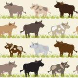 Άνευ ραφής πρότυπο με τις αγελάδες Στοκ εικόνες με δικαίωμα ελεύθερης χρήσης