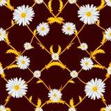 Άνευ ραφής σχέδιο διασχισμένος chamomiles στους χρυσούς μίσχους διανυσματική απεικόνιση
