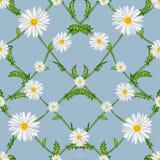 Άνευ ραφής σχέδιο διασχισμένος chamomiles διανυσματική απεικόνιση