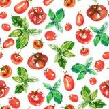 Άνευ ραφής σχέδιο επιφάνειας watercolor από τις φρέσκες ώριμες ντομάτες και πράσινος βασιλικός στο άσπρο υπόβαθρο Φρέσκες ντομάτε διανυσματική απεικόνιση