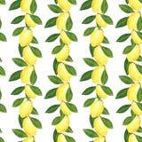 Άνευ ραφής σχέδιο εσπεριδοειδών φιαγμένο από λεμόνια Συρμένη χέρι απεικόνιση watercolor διανυσματική απεικόνιση