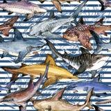 Άνευ ραφής σχέδιο καρχαριών Watercolor Στοκ Εικόνες