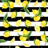 Άνευ ραφής σχέδιο με τα λεμόνια και τα φύλλα και το μισό από το λεμόνι, ζωγραφική watercolor απεικόνιση αποθεμάτων