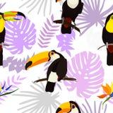 Άνευ ραφής σχέδιο με τα λουλούδια και το toucan πουλί απεικόνιση αποθεμάτων