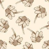 Άνευ ραφής σχέδιο με τα λουλούδια μαργαριτών ελεύθερη απεικόνιση δικαιώματος