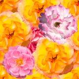 Άνευ ραφής σχέδιο με τα πορτοκαλιά και ρόδινα λουλούδια διανυσματική απεικόνιση