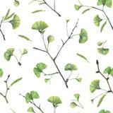 Άνευ ραφής σχέδιο με τα πράσινα φύλλα του biloba ginkgo στοκ φωτογραφίες