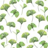 Άνευ ραφής σχέδιο με τα πράσινα φύλλα του biloba ginkgo στοκ φωτογραφία με δικαίωμα ελεύθερης χρήσης