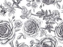 Άνευ ραφής σχέδιο με τα ροδαλά λουλούδια Στοκ φωτογραφίες με δικαίωμα ελεύθερης χρήσης