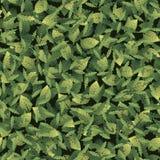 Άνευ ραφής σχέδιο με τα φύλλα των διαφορετικών μορφών απεικόνιση αποθεμάτων