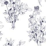 Άνευ ραφής σχέδιο με τα χορτάρια και τα λουλούδια σχεδίων Στοκ Εικόνες