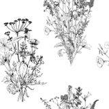 Άνευ ραφής σχέδιο με τα χορτάρια και τα λουλούδια σχεδίων Στοκ εικόνα με δικαίωμα ελεύθερης χρήσης