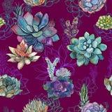Άνευ ραφής σχέδιο με τα succulents Burgundy στο υπόβαθρο graphics watercolor ελεύθερη απεικόνιση δικαιώματος