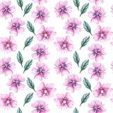 Άνευ ραφής σχέδιο με τα wildflowers ελεύθερη απεικόνιση δικαιώματος