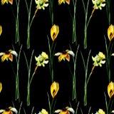 Άνευ ραφής σχέδιο με τον κρόκο, gerber και τα λουλούδια ναρκίσσων στοκ φωτογραφία με δικαίωμα ελεύθερης χρήσης