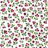 Άνευ ραφής σχέδιο με τους κλάδους lingonberry, που χρωματίζονται στο watercolor απεικόνιση αποθεμάτων