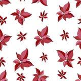 Άνευ ραφής σχέδιο με το κόκκινο poinsettia σε ένα άσπρο υπόβαθρο ελεύθερη απεικόνιση δικαιώματος
