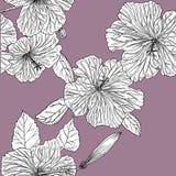 Άνευ ραφής σχέδιο με hibiscus συρμένο χέρι graphics διανυσματική απεικόνιση