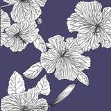 Άνευ ραφής σχέδιο με hibiscus συρμένο χέρι graphics ελεύθερη απεικόνιση δικαιώματος