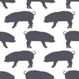 Άνευ ραφής σχέδιο σκιαγραφιών χοίρων στενό λευκό χοιρινού κρέατος κρέατος ανασκόπησης επάνω r επίσης corel σύρετε το διάνυσμα απε απεικόνιση αποθεμάτων