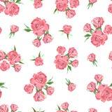 Άνευ ραφής σχέδιο στο άσπρο υπόβαθρο φυσικός ρόδινος λουλουδιών ομορφιάς στενός αυξήθηκε επάνω Στοκ Εικόνες