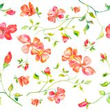 Άνευ ραφής σχέδιο της χειροποίητης απεικόνισης watercolor των κόκκινων λουλουδιών Στοκ Εικόνες