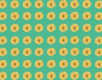 Άνευ ραφής σχέδιο του φρέσκου κίτρινου λουλουδιού μαργαριτών στο πράσινο backgroun Στοκ Εικόνες