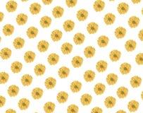 Άνευ ραφής σχέδιο του φρέσκου κίτρινου λουλουδιού μαργαριτών στο άσπρο backgroun Στοκ Εικόνες