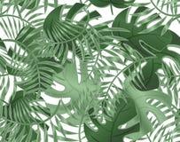 Άνευ ραφής σχέδιο του monstera φύλλων Τροπικά φυτά, φύλλα του φοίνικα Άνευ ραφής σχέδιο με τα εξωτικά δέντρα   διανυσματική απεικόνιση