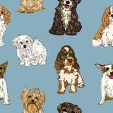 Άνευ ραφής σχέδιο των διαφορετικών φυλών των σκυλιών ελεύθερη απεικόνιση δικαιώματος