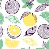 Άνευ ραφής σχέδιο των εσπεριδοειδών Φρούτα, φύλλο, φέτα, λουλούδι του πορτοκαλιού, ασβέστης, λεμόνι Διανυσματική συρμένη χέρι απε στοκ εικόνες