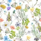 Άνευ ραφής σχέδιο των θερινών wildflowers Στοκ εικόνα με δικαίωμα ελεύθερης χρήσης
