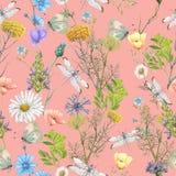 Άνευ ραφής σχέδιο των θερινών wildflowers Στοκ εικόνες με δικαίωμα ελεύθερης χρήσης